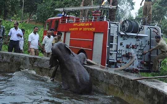 слоненок упал в бассейн в Западной Бенгалии